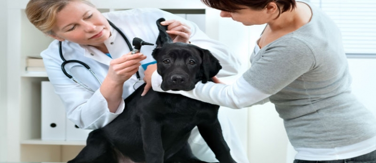 Give Your Furry Family Member the Care It Needs at a Vet Hospital in Roswell