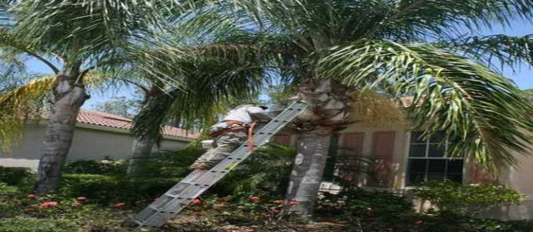 Three Common Reasons for Tree Removal in Naples FL