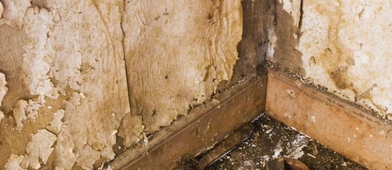 Warning Signs Your Home Needs Foundation Repair in Rockville