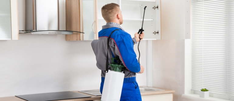 "Don't ""Bug"" Out! Pest Control Services in Ankeny, IA, Can Help"