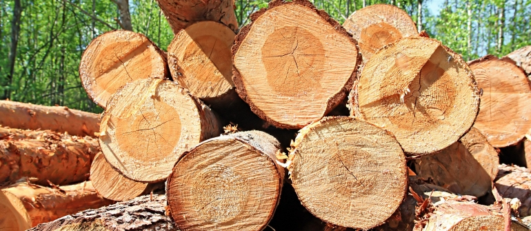 Consider Using a Tree Service in Cape Coral Remove Your Stumps