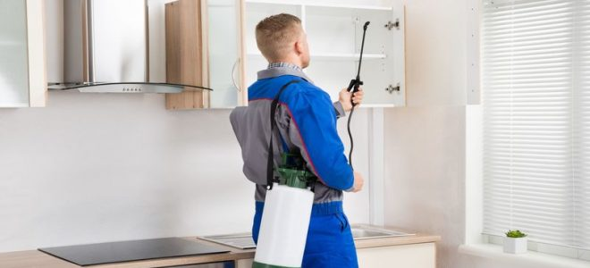 Eliminate Rodents With Non Toxic Pest Control Options