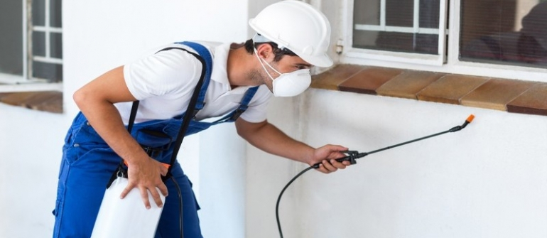 Pest and Wildlife Removal Services in Newnan GA Emphasize Preventive Pest Control
