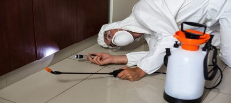 Trusted And Affordable Pest Inspection In Newnan GA