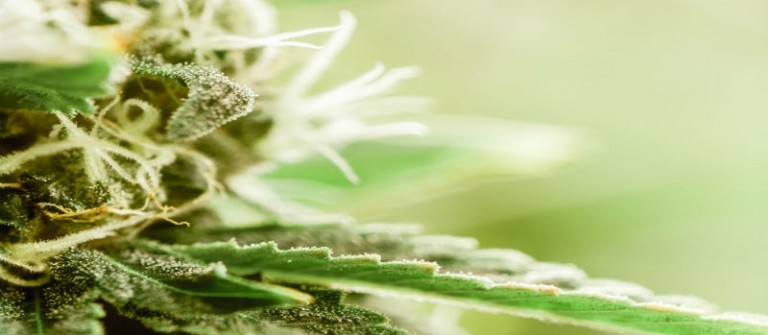 3 Benefits of Using Marijuana Delivery Services in Orange County