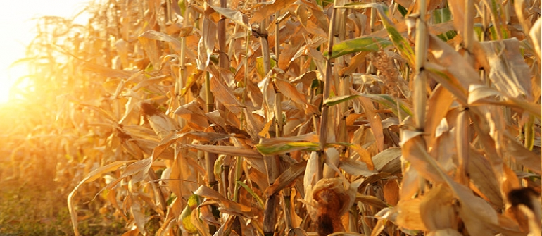 What Are the Top Benefits of Seed Treatment in Vernon County, WI?